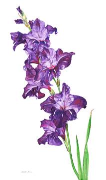 Irie Purple Gladiolus